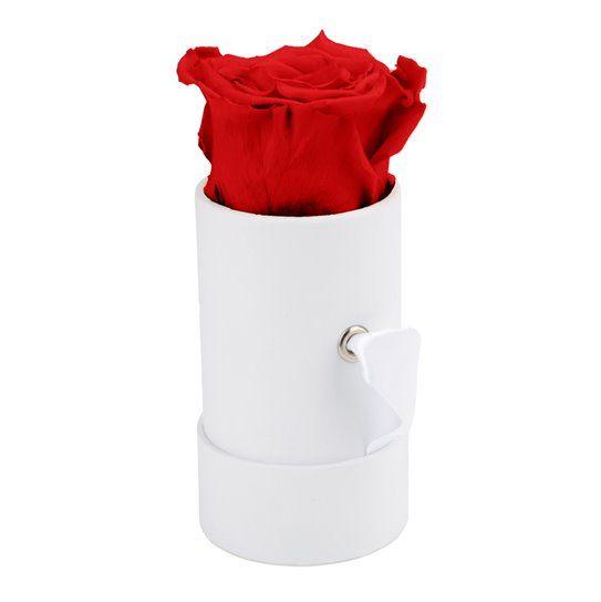 Dárková stabilizovaná růže, v držáku pro reklamní potisk